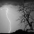 Lightning Tree Silhouette Black And White by James BO  Insogna