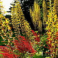 Ligularia And Astilbe by Sarah Malley