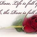 Like The Rose by Mechala Matthews