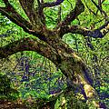 Likin Lichen - Blue Ridge Mountains by Dan Carmichael