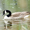 Lila Goose Queen Of The Pond 2 by Lesa Fine