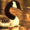 Lila Goose The Pond Queen Sepia by Lesa Fine