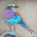 Lilac-breasted Roller by Leigh Banks