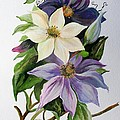 Lilac Clematis by Taiche Acrylic Art