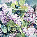Lilac Delight by Deborah Ronglien