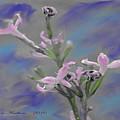 Lilac Dream by Jennifer Lesher - Arellano