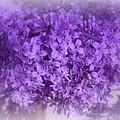 Lilac Fantasy by Kay Novy