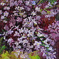 Lilacs by Cindy Roesinger