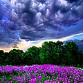 Lilacs by Phil Koch
