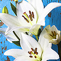 Lilies Against Blue Wall by Garry Gay