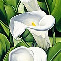 Lilies by Catherine Abel