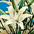 Lilies In White by Shirley Tinkham