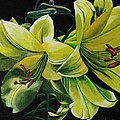 Lilies by Kristina Hauk
