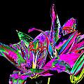 Lilies Pop Art by Phyllis Denton
