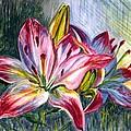 Lilies Twin by Harsh Malik
