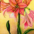 Lilies by Zina Stromberg