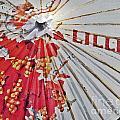 Lillet Parasol by Lilliana Mendez