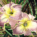 Lillies Clothed In Glory by Barbara Jewell
