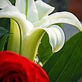 Lilly And Rose by Photographic Arts And Design Studio