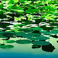 Lilly Pads Of Reelfoot Lake by Bonnie Willis