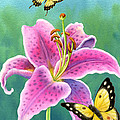Lily And Butterflies by Barbara Lanza