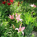 Lily Garden by Marilyn Smith