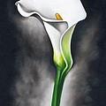 Lily by Ilse Kleyn