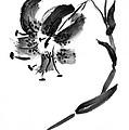 Lily In Black by Patricia Novack