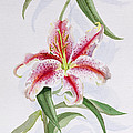 Lily by Izabella Godlewska de Aranda
