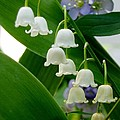 Lily Of The Valley Green by Renee Croushore