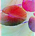 Lily Pad 1 by Susanne Van Hulst