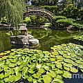 Lily Pad Garden - Japanese Garden At The Huntington Library. by Jamie Pham