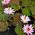 Lily Pad Haven by Frozen in Time Fine Art Photography