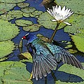 Lily Pad With Bird by Jacquelinemari