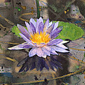 Lily Pad With Purple Flower by Susan Powell