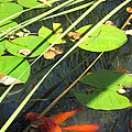 Lily Pads 2 by Mary Bedy