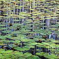 Lily Pads And Cypress Reflections by Susan Cole Kelly