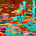 Lily Pads And Koi Colorful Water Garden In Bloom Waterlilies At The Lake Quebec Art Carole Spandau  by Carole Spandau