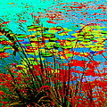 Lily Pads And Reeds Colorful Water Gardens Grasslands Along The Lachine Canal Quebec Carole Spandau by Carole Spandau