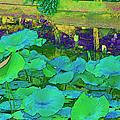 Lily Pads by Bonnie Willis