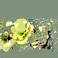 Lily Pads - Deconstructed by Lauren Radke