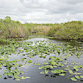 Lily Pads Floating On Water, Anhinga by Panoramic Images
