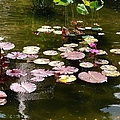 Lily Pads In The Fountain by Christy Gendalia