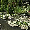 Lily Pads Monets Garden by Christiane Schulze Art And Photography