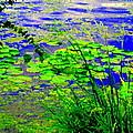 Lily Pads On The Lachine Canal Summer Landscape Scenes Colors Of Quebec Art Carole Spandau by Carole Spandau
