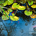 Lily Pads Ripples And Gold Fish by Silvia Ganora
