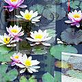 Lily Pads by Rosie McCobb