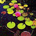 Lily Pads With Pink Flowers - Square by Lyn Voytershark