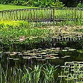 Lily Pond Bridge by Susan Cole Kelly