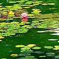 Lily Pond  by Jeff Lowe